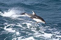 Ocean Stewardship